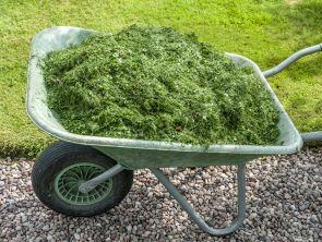 Wheel barrow with grass cuttings
